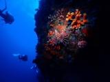 ペスカドール島