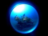 アオリイカの産卵床