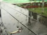 朝から降り続ける冷たい雨