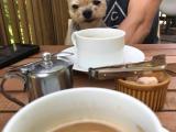 食後のコーヒーとコムギ