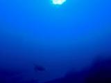 寝起きのウミガメが息継ぎへ向かいます