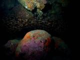 キンメモドキに囲まれるカラフルな岩