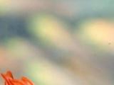 背景キンメモドキなウミウシ