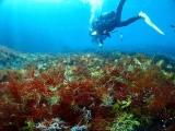 この海藻の深さは70㎝もあります