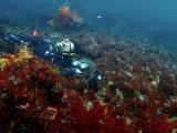 海藻に埋まるという新しいダイビングスタイルを発見
