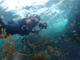 舞う海藻を撮る鍵井さん