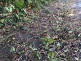 道を埋め尽くす蔦や草