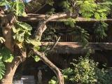 木に囲まれたオシャレなお店でした