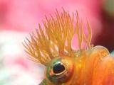 伊豆大島の生物たち