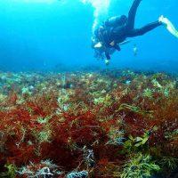 海藻まみれ
